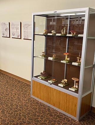 Imagem de duas vitrines de vidro da Biblioteca de Ciências da Saúde. Dentro das caixas, há uma variedade de modelos de cogumelos.