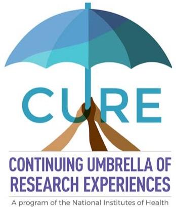 Paraguas continuo de experiencias de investigación