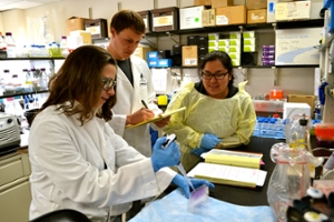 biology dissertation titles Biomedical sciences theses and dissertations the department of biomedical  sciences offers a graduate major in biomedical sciences that leads to an ms or.